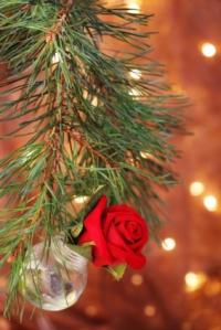 FD_ChristmasTreeRose